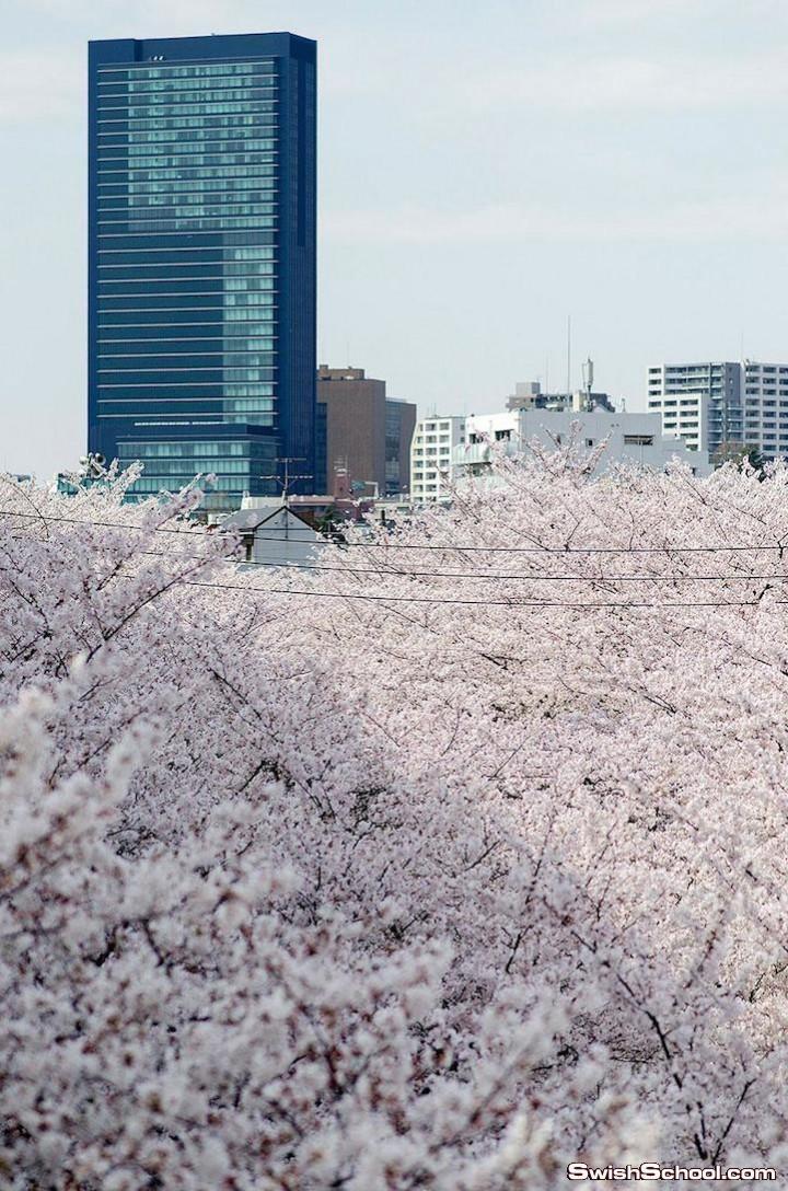 اليابان.. bntpal.com_142528375