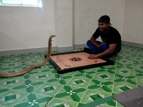 رجل يعيش مع أفعى اعتقادا بانها جسد صديقته الميته... bntpal.com_148338920