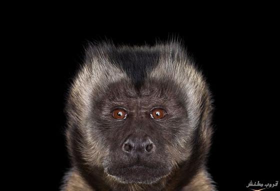 حيوانات تنظر الكاميرا bntpal.com_148413550