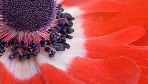اجمل الصور العالم bntpal.com_149056447
