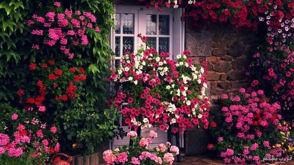 منازل تندمج مع الزهور