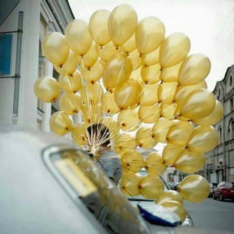 زارَ الأصفر شيئاً إنتشى فرحاً bntpal.com_151025247
