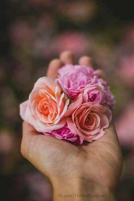 عآشقةة الورد ♥ ,تجميعي bntpal.com_152658694