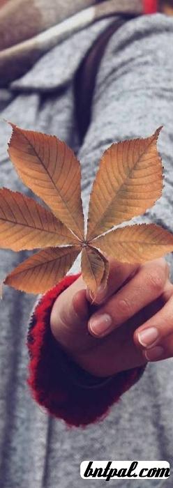 أزهرتُ ركنٍ 🌼💙 رمزيآت تصميمي bntpal.com_153829190