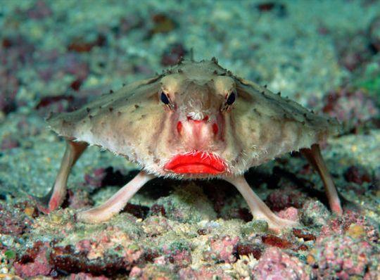السمكة الشفاه الحمراء bntpal.com_162591914