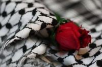 الصورة الرمزية فداءفلسطين