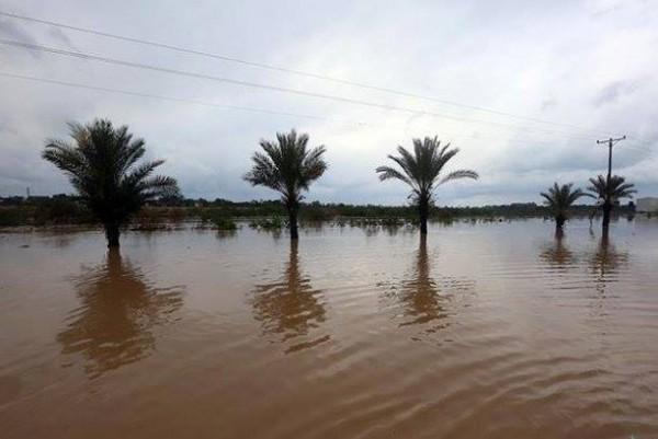 كارثة حقيقيه-غرق عشرات المنازل المغراقة bntpal_1424598058_26