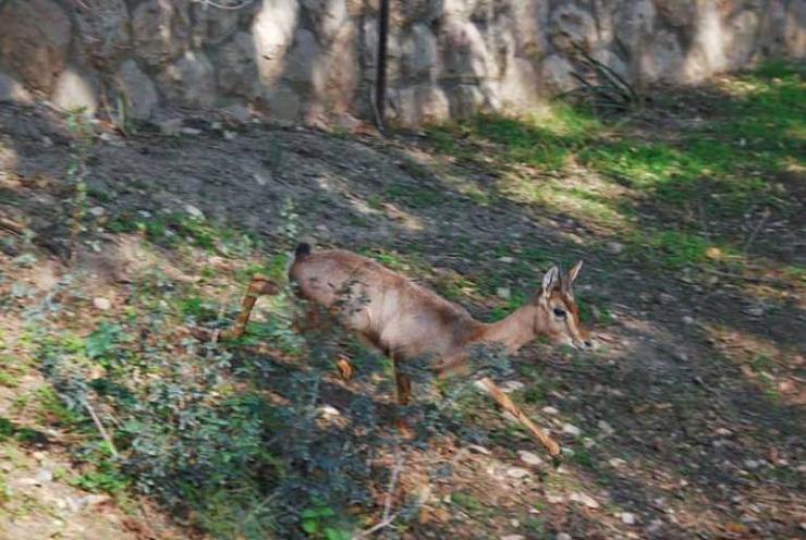 بركة مياه تتلون جبال القدس bntpal_1426791303_78
