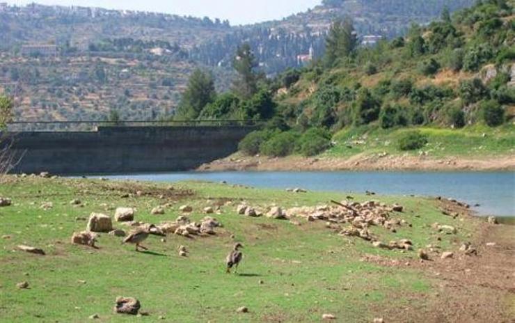 بركة مياه تتلون جبال القدس bntpal_1426791306_65