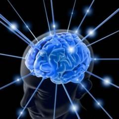 دراسة: تقليل الطعام يعزز الدماغ bntpal_1430292556_85