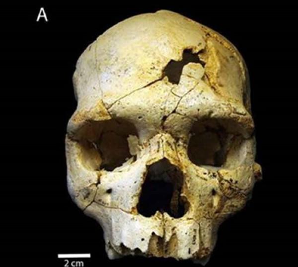 العثور جمجمة هابيل bntpal_1433406257_69