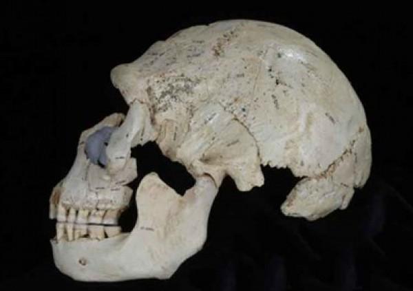 العثور جمجمة هابيل bntpal_1433406258_48