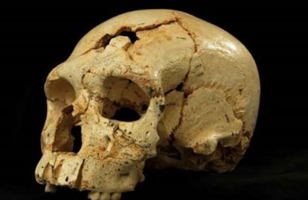 العثور جمجمة هابيل bntpal_1433406258_79