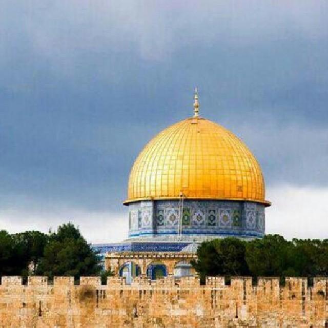 ♥خُلِقَ الحُبُ فلسطينياً bntpal_1433686600_90