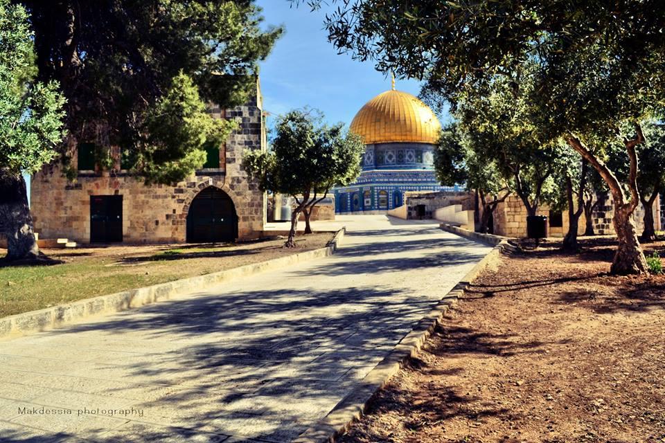 ♥خُلِقَ الحُبُ فلسطينياً bntpal_1433686605_81