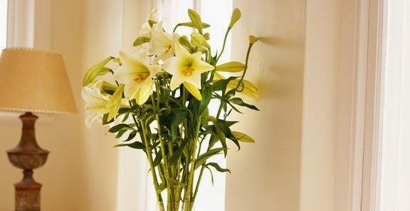 شخصيتك الورود التي تحبها bntpal_1434439430_10