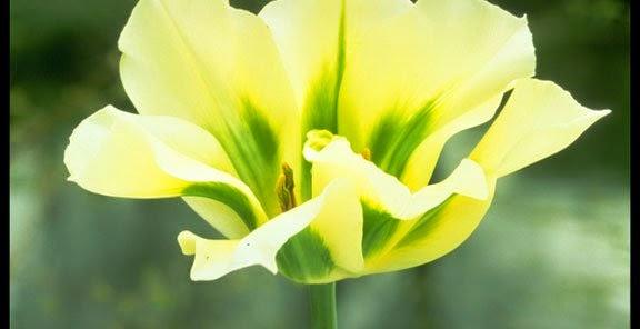 شخصيتك الورود التي تحبها bntpal_1434439430_21