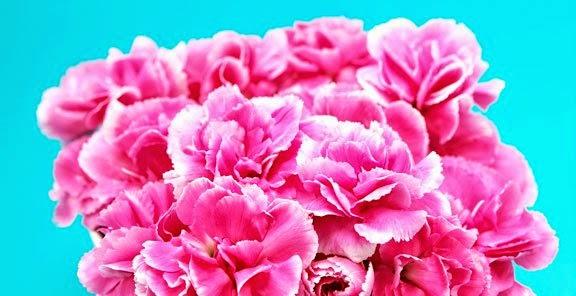 شخصيتك الورود التي تحبها bntpal_1434439431_20