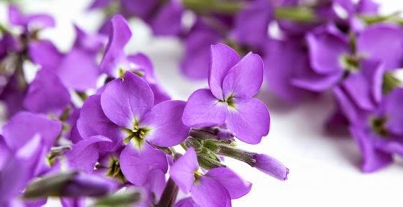 شخصيتك الورود التي تحبها bntpal_1434439431_29