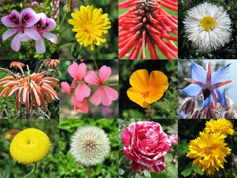 شخصيتك الورود التي تحبها bntpal_1434439431_45