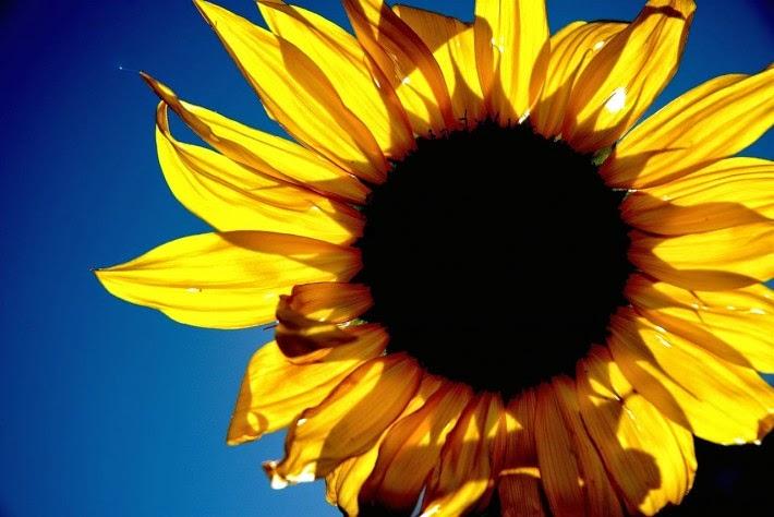 شخصيتك الورود التي تحبها bntpal_1434439433_83
