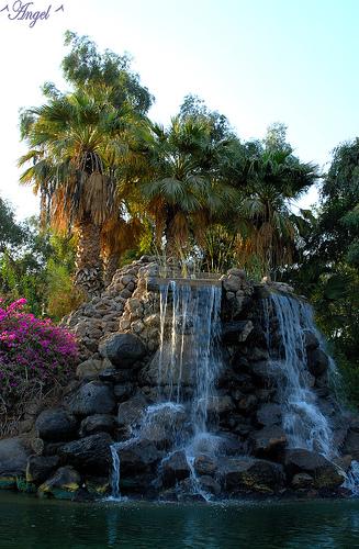 حديقة منتدانا بنات فلسطين bntpal_1437993032_66