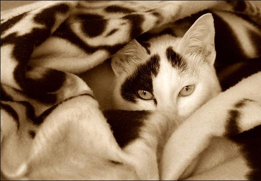 أناآ والقطط قصةة تنتهي bntpal_1443210755_66