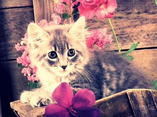 أناآ والقطط قصةة تنتهي bntpal_1443210756_30