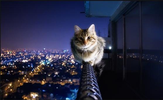 أناآ والقطط قصةة تنتهي bntpal_1443210756_32