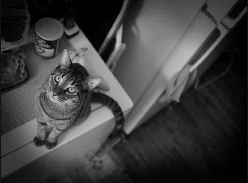 أناآ والقطط قصةة تنتهي bntpal_1443210756_38
