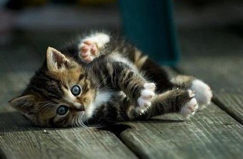 أناآ والقطط قصةة تنتهي bntpal_1443210756_64