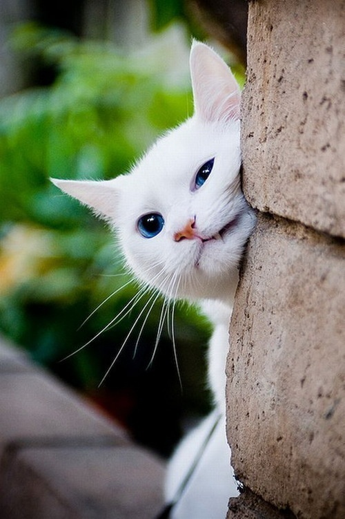 أناآ والقطط قصةة تنتهي bntpal_1443210756_84