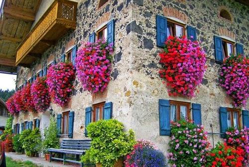 بيوت تزينها الزهور بشكل خيالي bntpal_1445633891_66