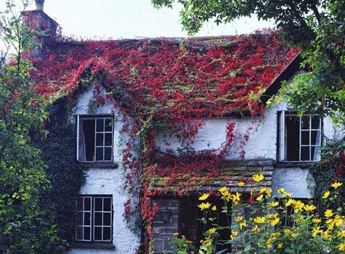 بيوت تزينها الزهور بشكل خيالي bntpal_1445633891_83