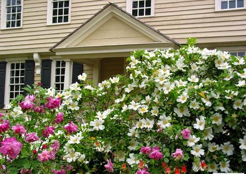 بيوت تزينها الزهور بشكل خيالي bntpal_1445633894_32