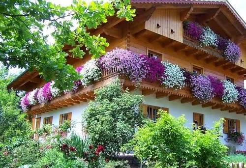 بيوت تزينها الزهور بشكل خيالي bntpal_1445633894_98