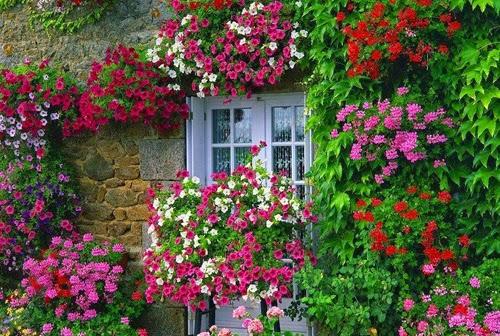 بيوت تزينها الزهور بشكل خيالي bntpal_1445633897_91