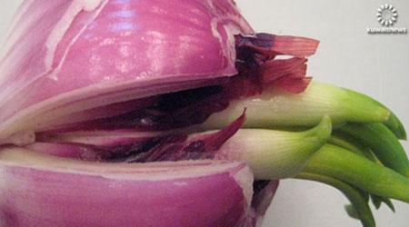 البصل سيكون النبات الطبي لعام bntpal_1448553041_73