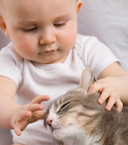 قصتي القطه توتو ماتت مسمومه bntpal_1448658404_63