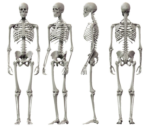 حقائق واعجازات الجسم البشري فريق bntpal_1448742723_23