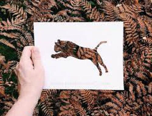 فنان يستعين بالطبيعة لإستكمال لوحاته bntpal_1449342597_18