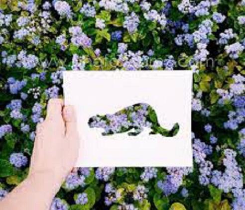 فنان يستعين بالطبيعة لإستكمال لوحاته bntpal_1449342597_31