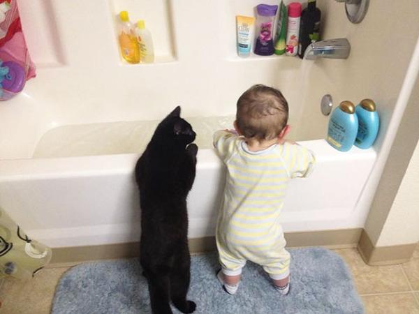 الاطفال والقطط ♫ bntpal_1457623797_44