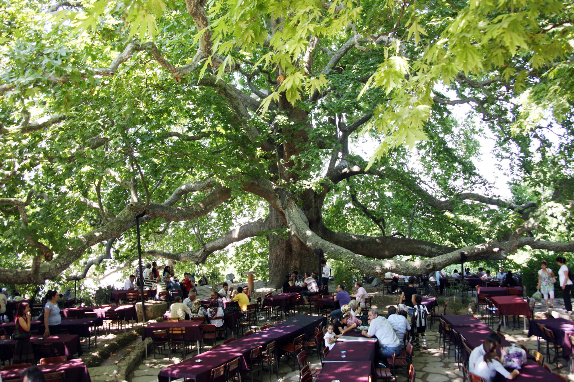 مدينة بورصة الخضراء تركيآ bntpal_1458398762_13