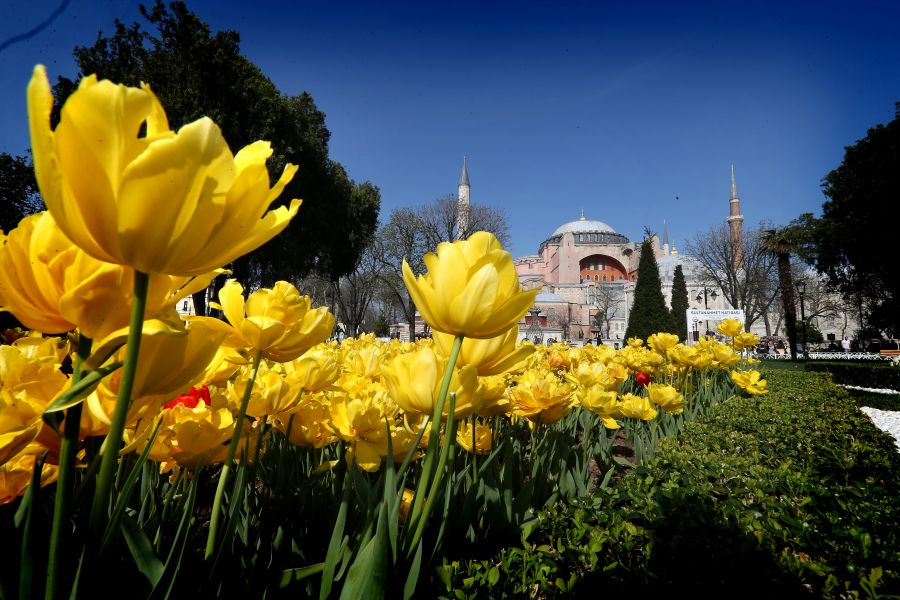 """التوليب"""" تضفي إسطنبول جمالا خلابا bntpal_1460753885_40"""