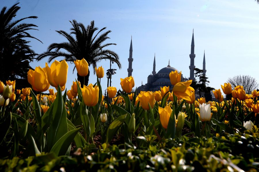"""التوليب"""" تضفي إسطنبول جمالا خلابا bntpal_1460753890_35"""