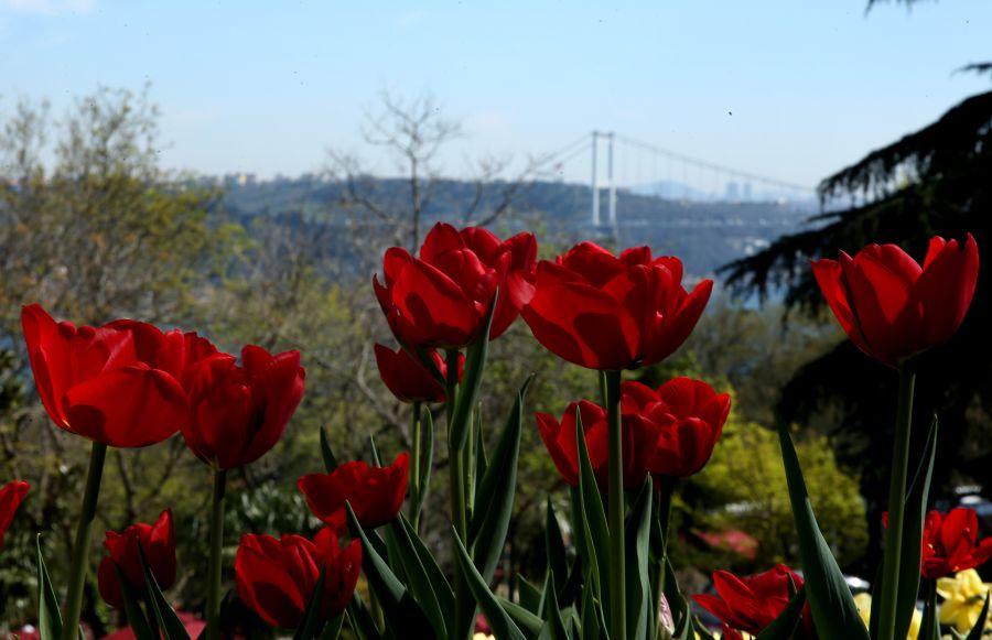 """التوليب"""" تضفي إسطنبول جمالا خلابا bntpal_1460753895_53"""