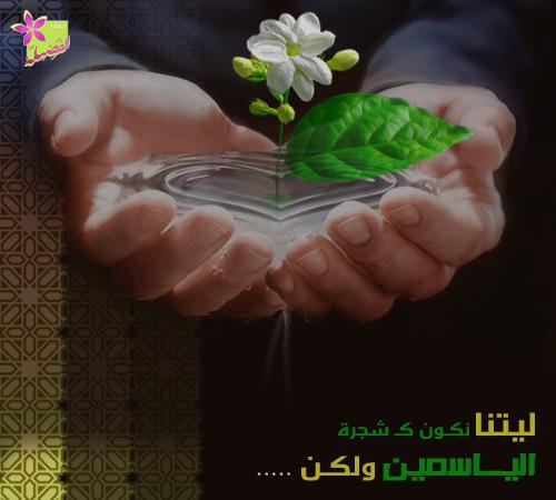 ليتنا نكونُ كشجرةِ الياسمين bntpal_1464799581_89