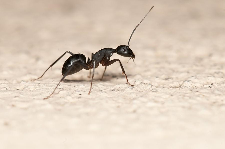 أحدث الطرق للتخلص النمل المنزل bntpal_1474028956_76
