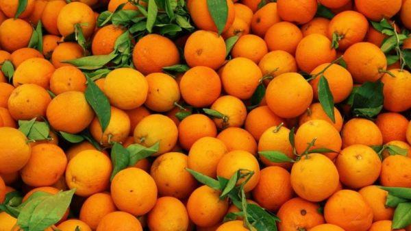 ماذا سيحدثاذا تناولت فاكهه البرتقال bntpal_1474401141_95